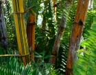 bamboo-patch