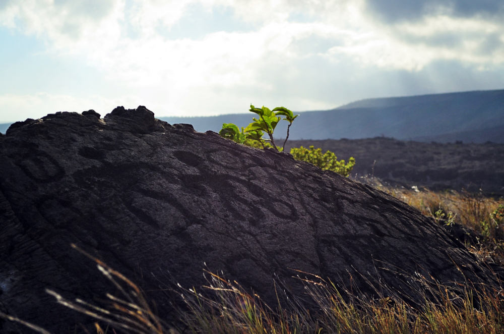 puu-loa-petroglyphs-at-volcanoes-national-park