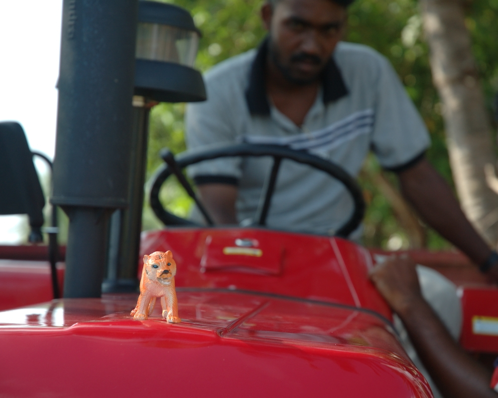 tiger-on-tractor